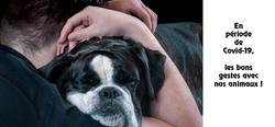 Covid-19 et animaux de compagnie : recommandations