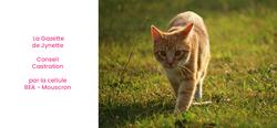 La castration du chat et ses bienfaits parfois méconnus - Cellule Bien être animal Mouscron