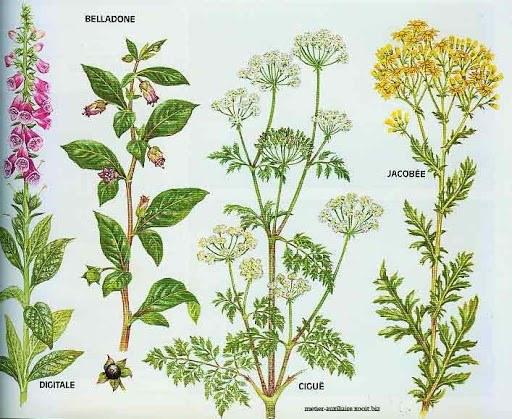 plantes en prairie