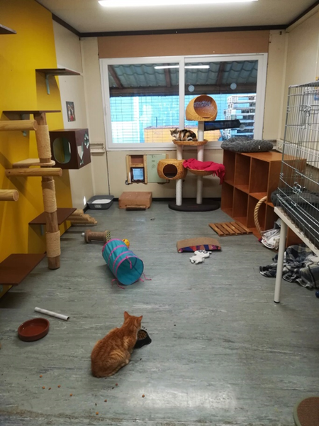 Cats-Cocoon-protection-chats-mouscron