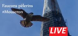 Live-Faucon-Mouscron